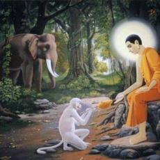 Mettā - Practice of Universal Love